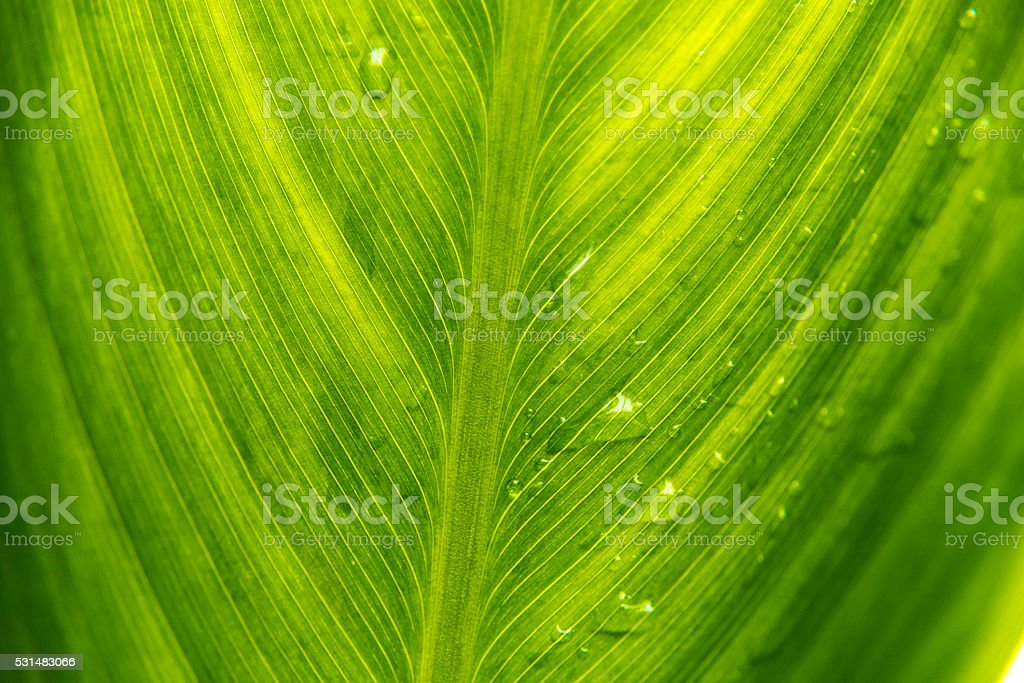leaf with rain droplets stock photo