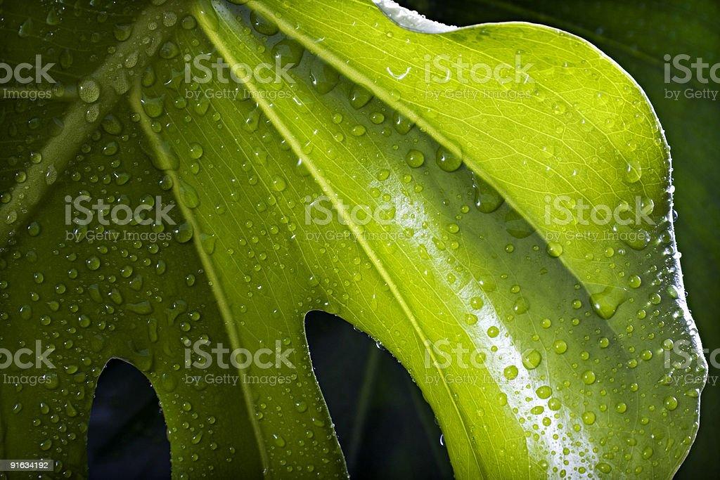 Лист с капли дождя Стоковые фото Стоковая фотография