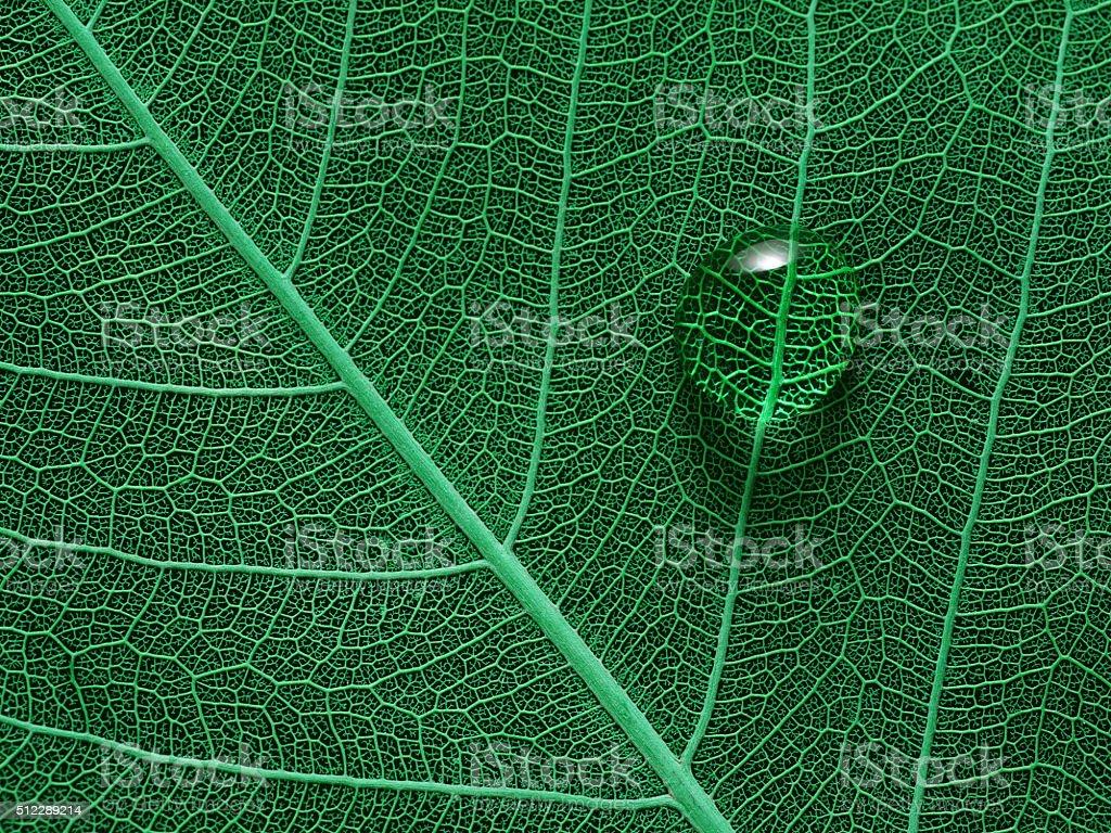 Leaf with water drop macro closeup photo stock photo