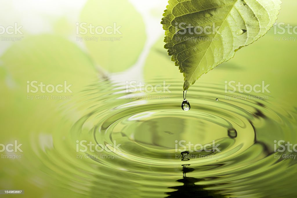 Leaf with water drop stock photo
