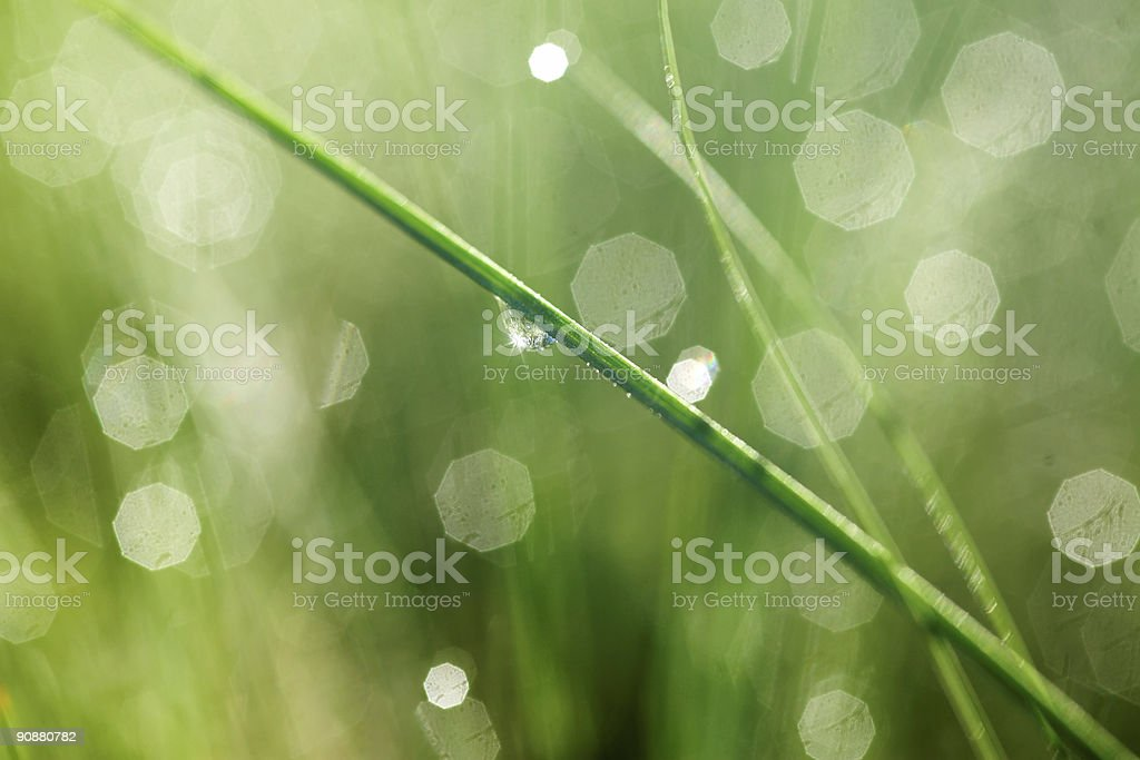 leaf with water drop royalty-free stock photo