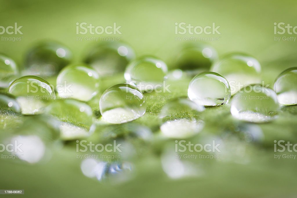 Leaf with water drops. royalty-free stock photo