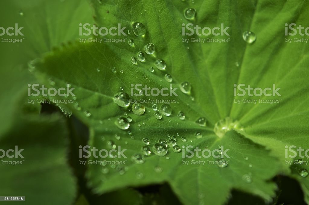 leaf with waterdrops stock photo