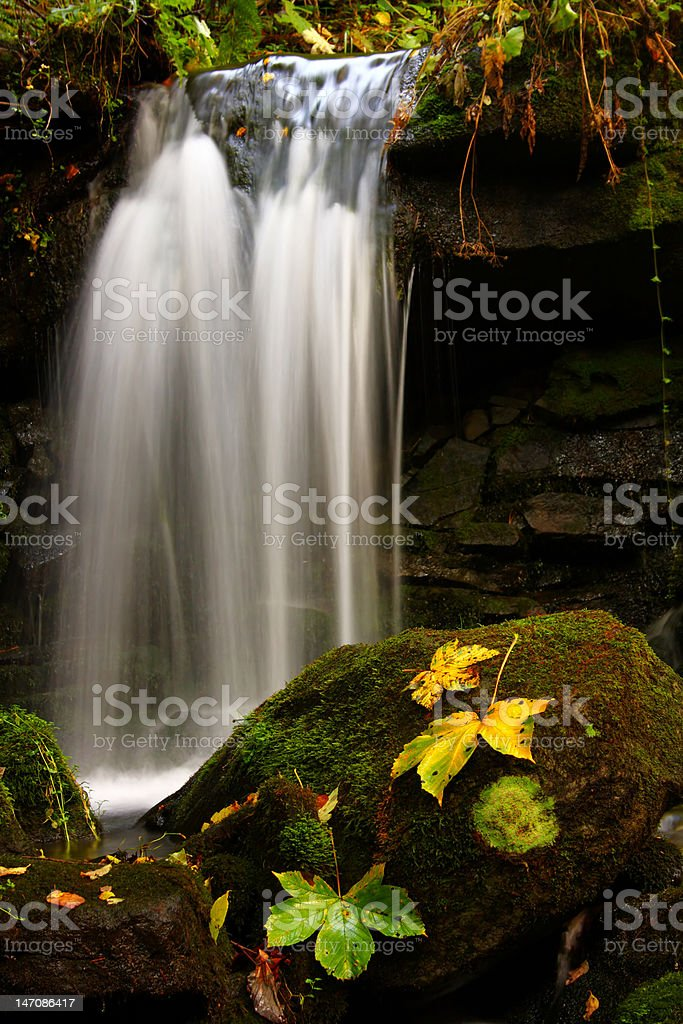 Leaf with waterfall royalty-free stock photo