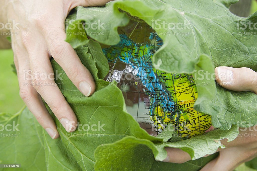 Leaf Wrapped Earth. royalty-free stock photo