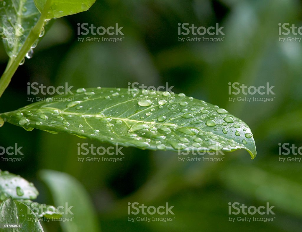 Leafes in the morning royalty-free stock photo
