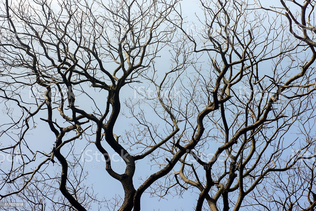 Leafless branches isolated on white background stock photo