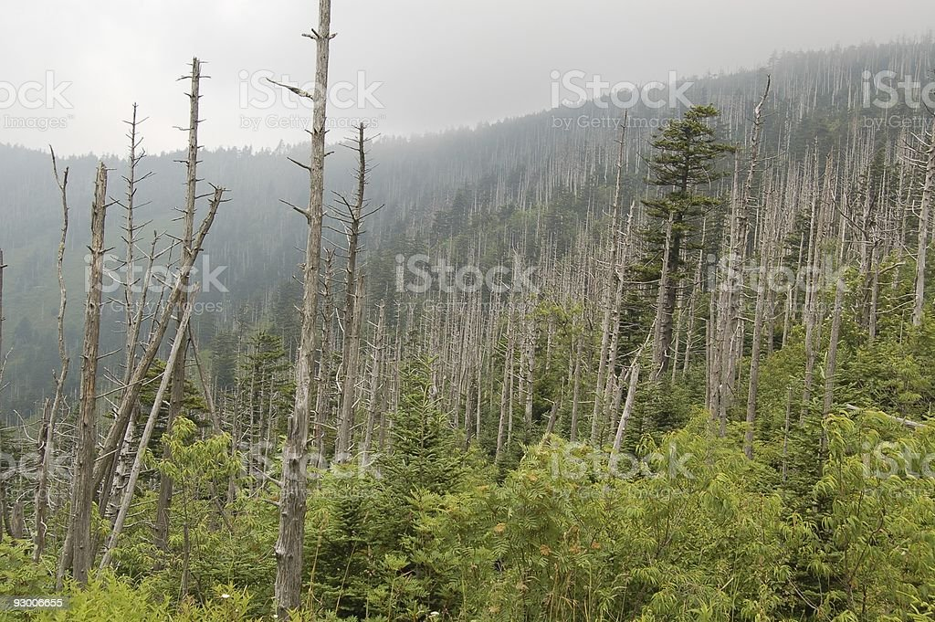 Leafless Forest stock photo
