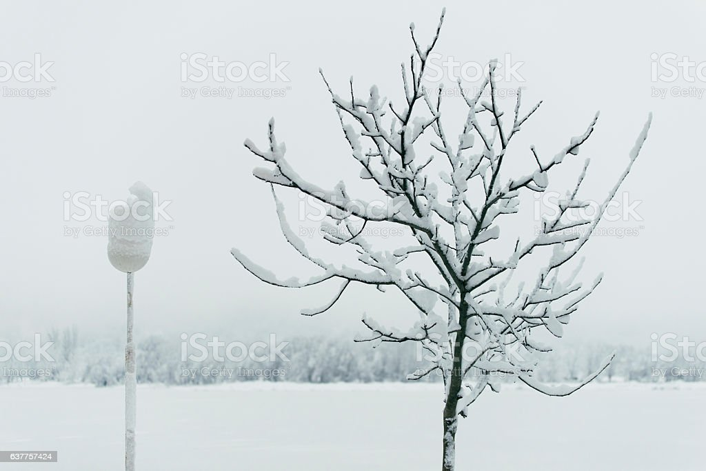 Leafless tree and a street lamp with snow stock photo