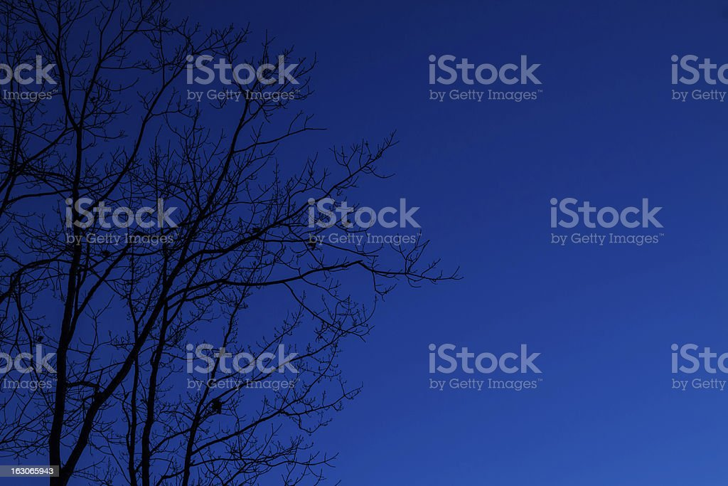 Leafless tree and blue sky royalty-free stock photo