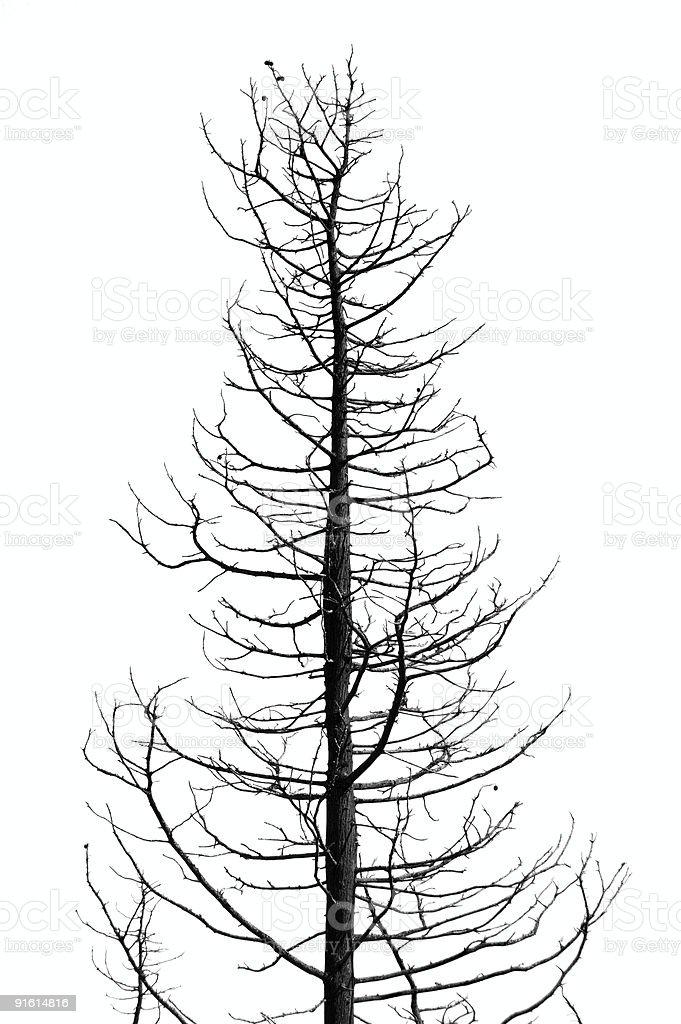 leafless tree royalty-free stock photo