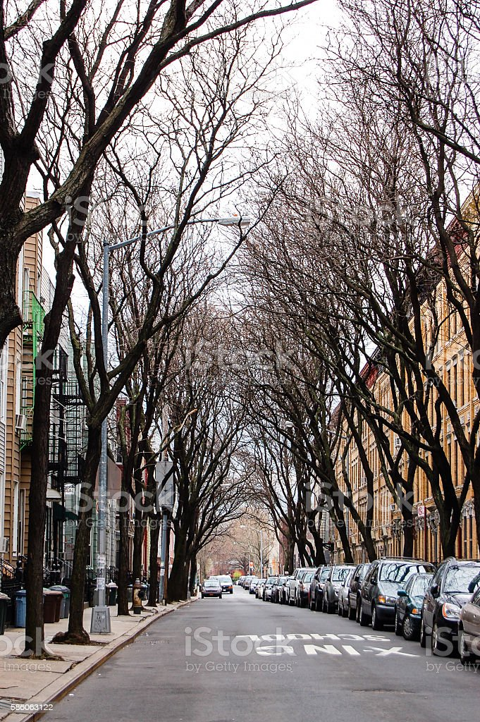 Leafless trees tunnel on street in Brooklyn stock photo