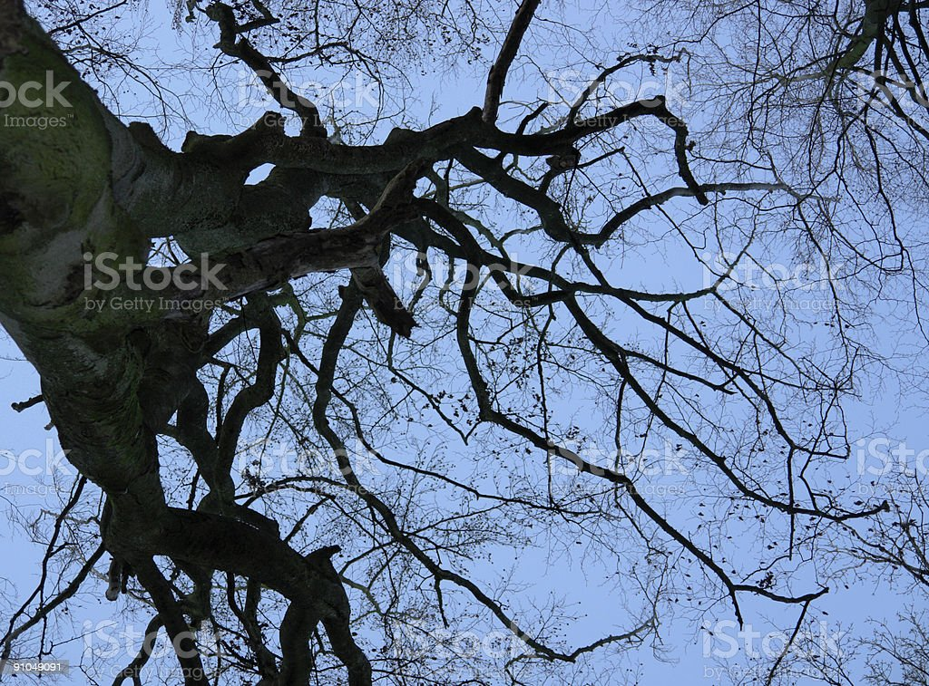 leafless treetop and evening sky royalty-free stock photo