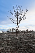 Leafless winter tree, barren landscape