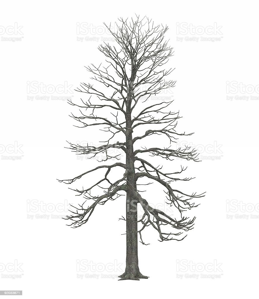 Leafless Winter tree royalty-free stock photo