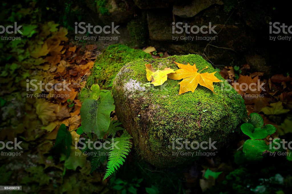 Leafs on Rock royalty-free stock photo