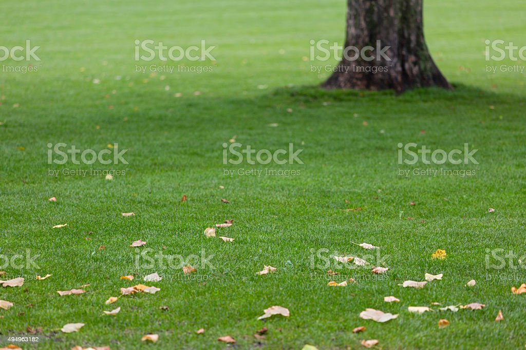 Leafs on the lawn in Rosenborg Castle Gardens, Copenhagen stock photo
