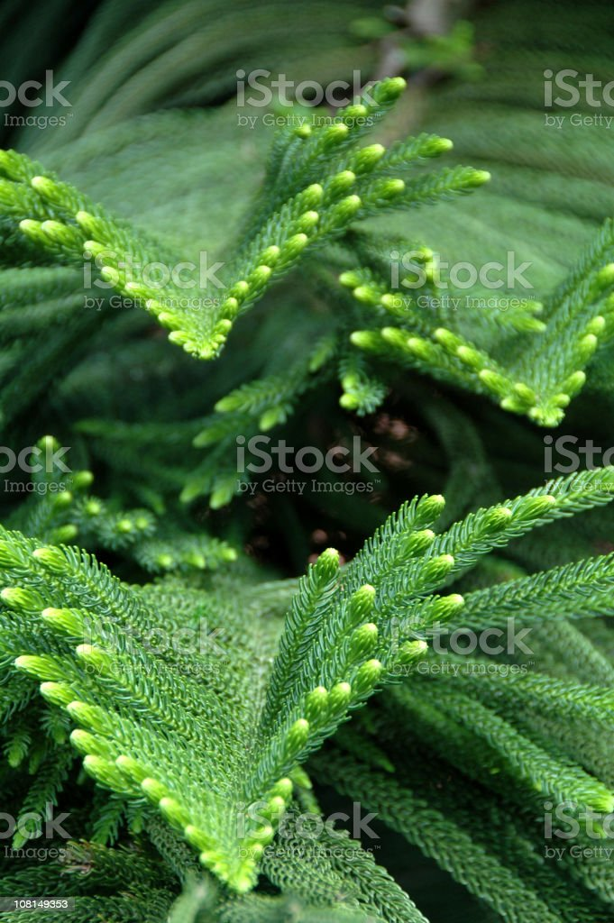 Leafs Pattern royalty-free stock photo