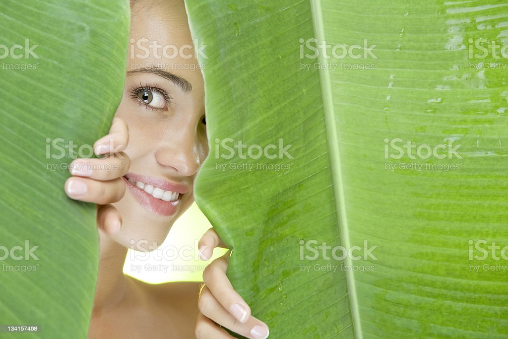leafs royalty-free stock photo