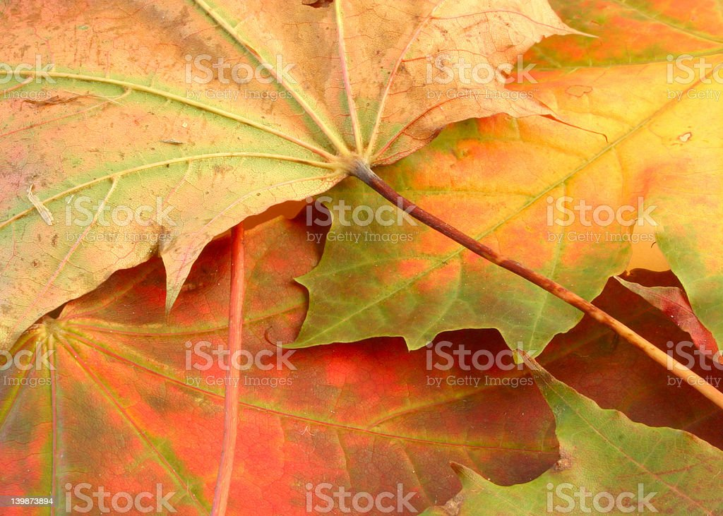 leafy background royalty-free stock photo