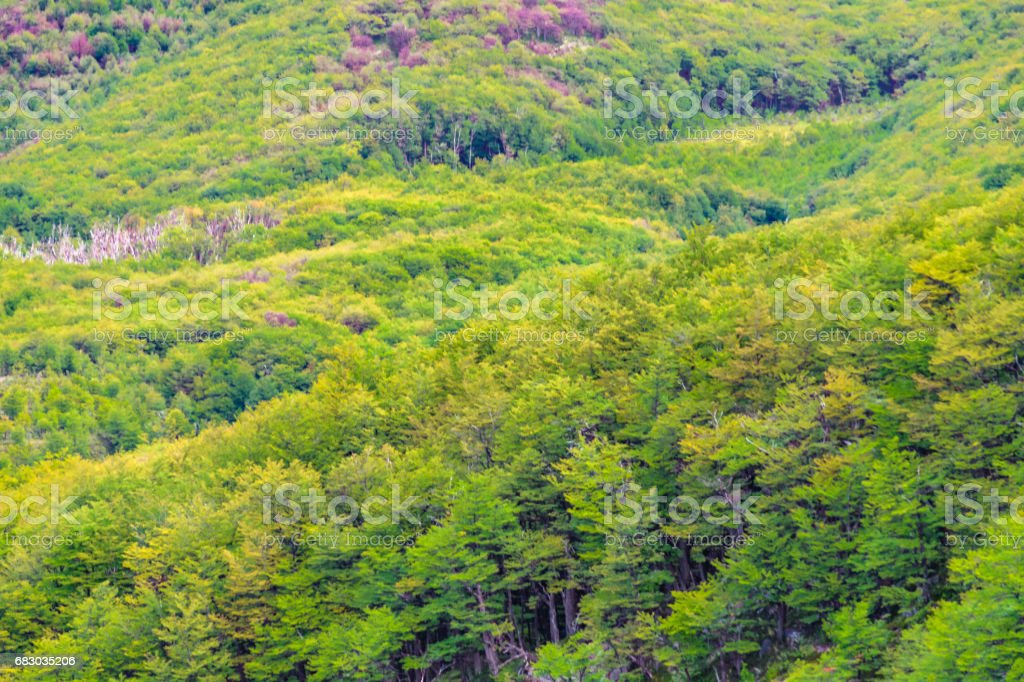 Leafy Forest, Patagonia - Argentina stock photo
