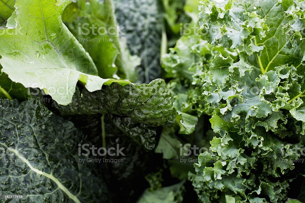 leafy greens close up stock photo