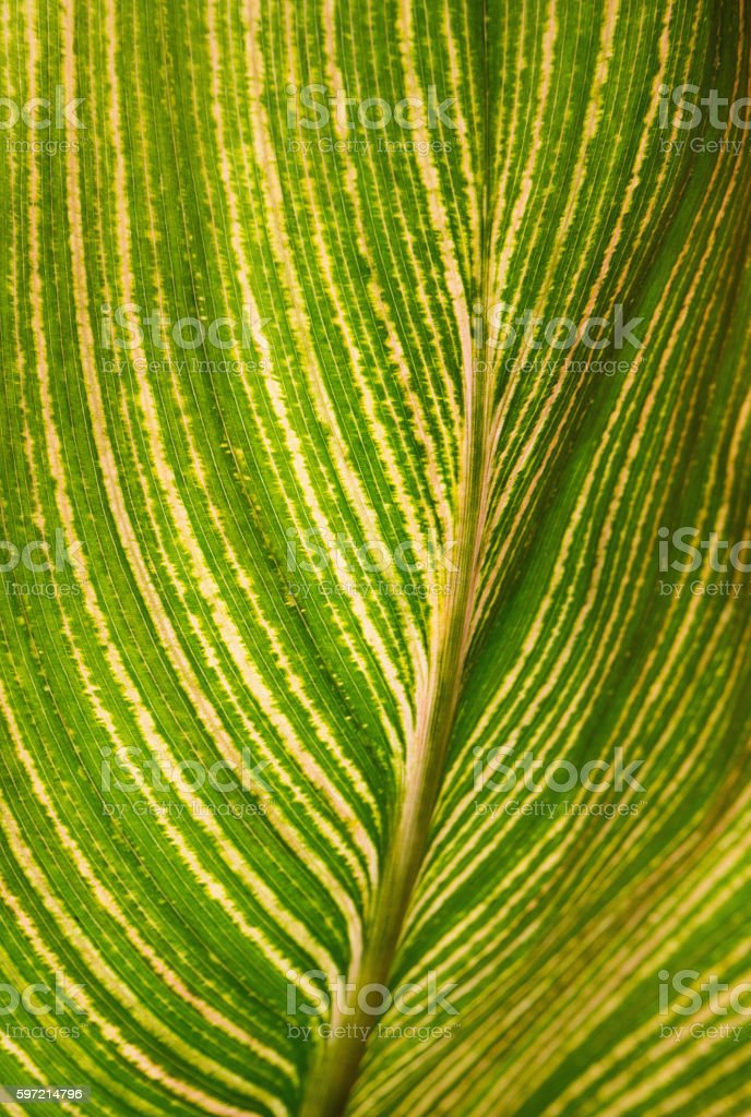 Leafy Lines and Swirls stock photo