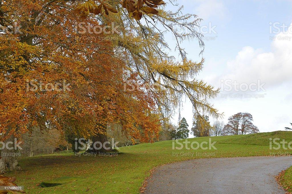 Leafy Road stock photo