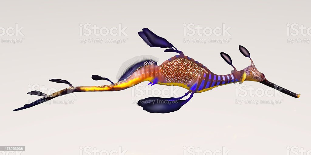 Leafy Seadragon stock photo