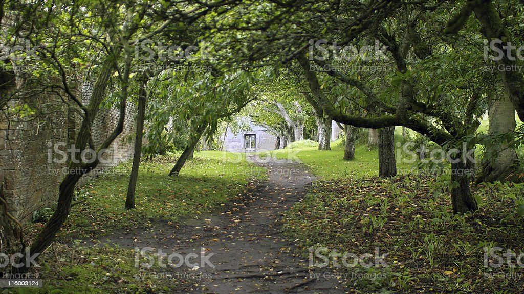 Leafy Tunnel royalty-free stock photo