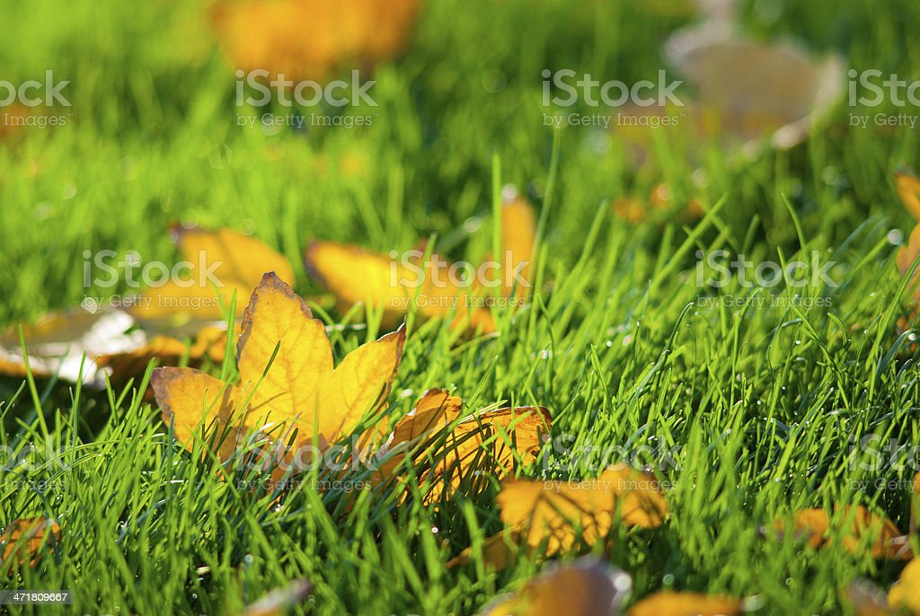 Leafy turf royalty-free stock photo