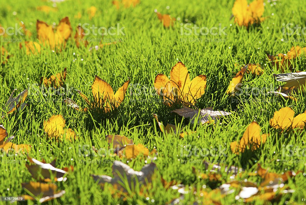Leafy turf royalty-free stock photo