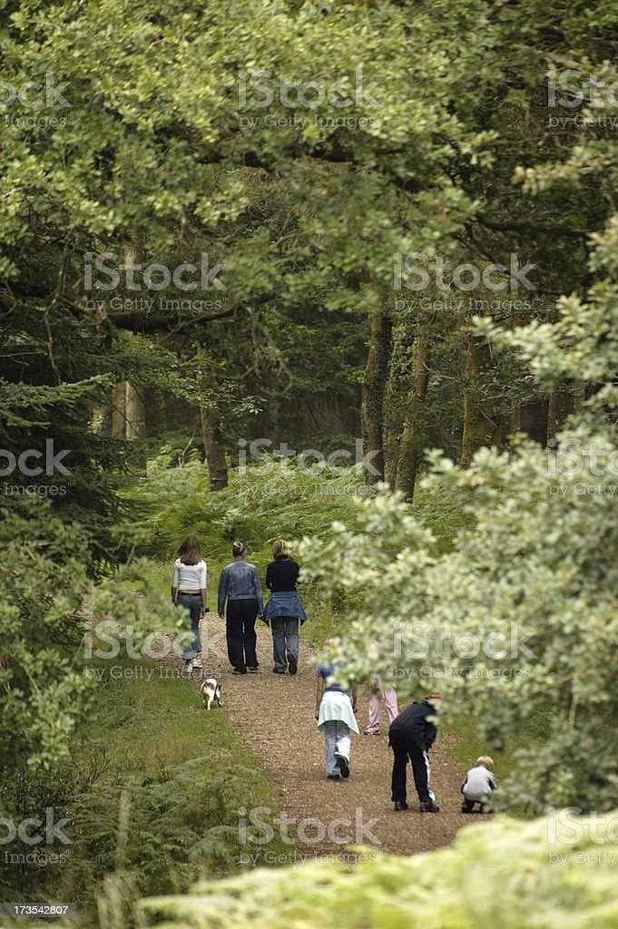 leafy walk royalty-free stock photo