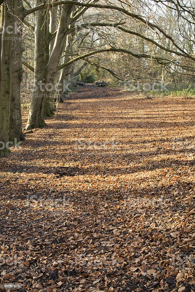 Leafy Winter Forest Walk stock photo