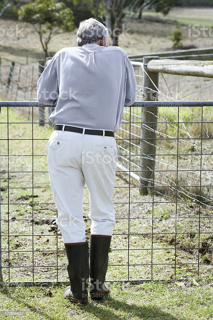 Leaning on farm gate royalty-free stock photo