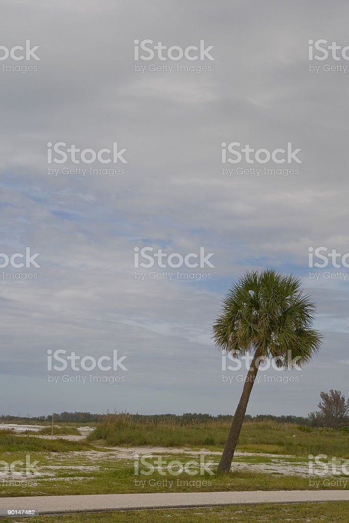 Leaning Palm stock photo