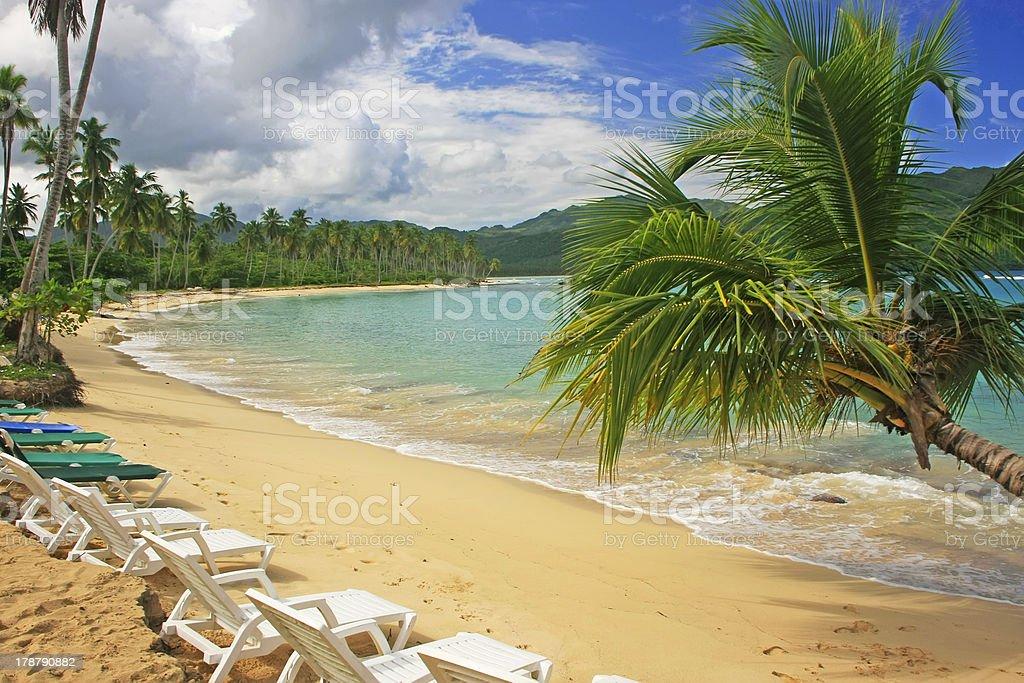 Leaning palm tree at Rincon beach, Samana peninsula royalty-free stock photo