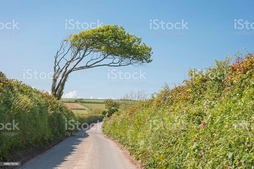 Leaning tree stock photo