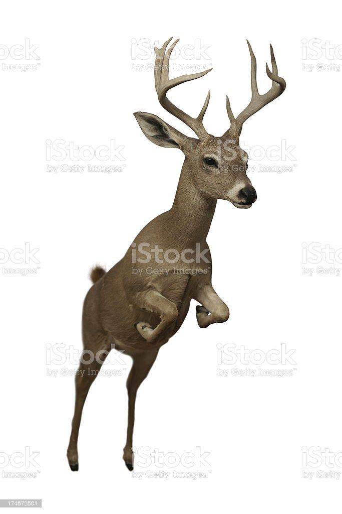 Leaping Deer Design Element stock photo