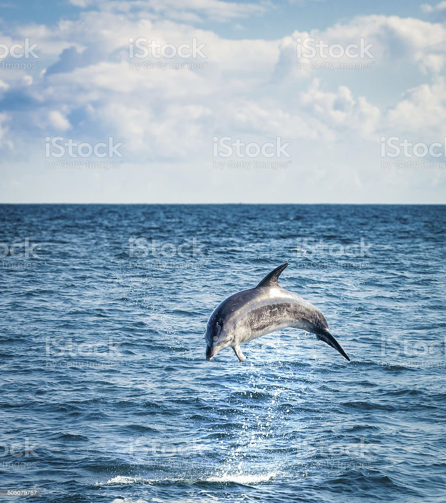 Leaping Dolphin stock photo