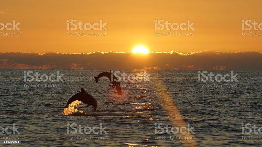 leaping pair stock photo