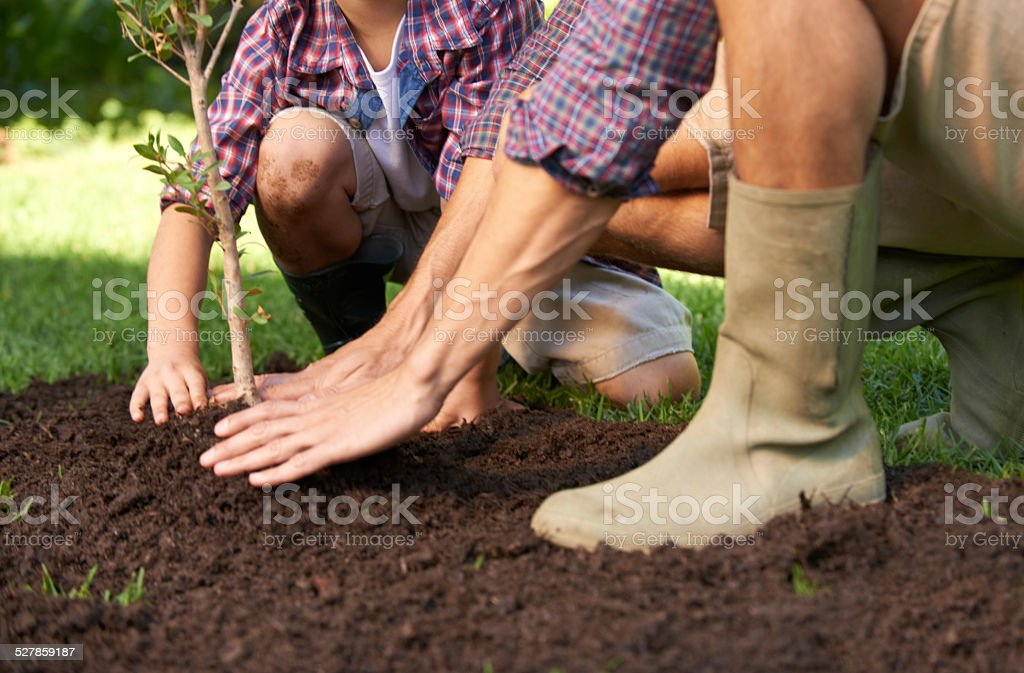 Learning to nurture nature stock photo