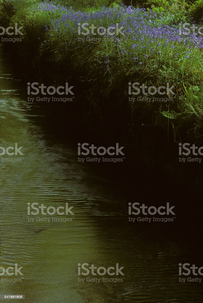 Leat System Luxulyan Valley stock photo