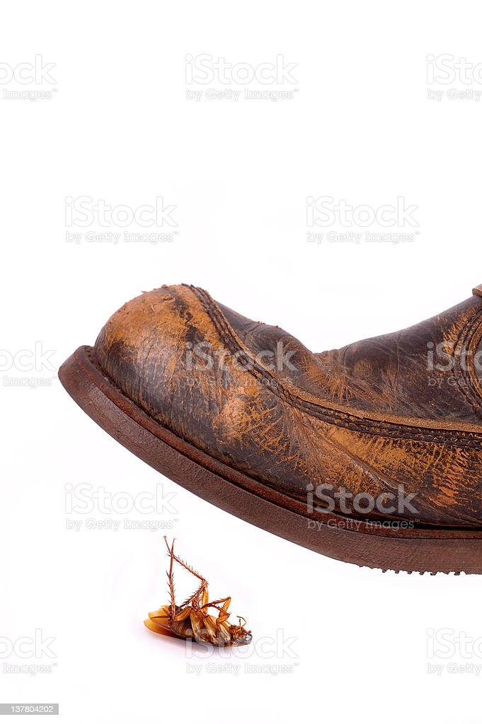 Leather boot ready to trample cockroach stock photo