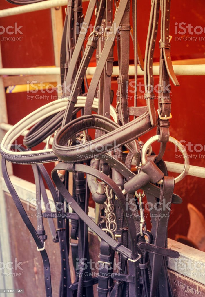 leather bridle stock photo