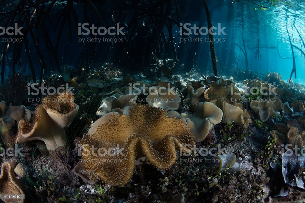 Leather Corals and Blue Water Mangrove stock photo