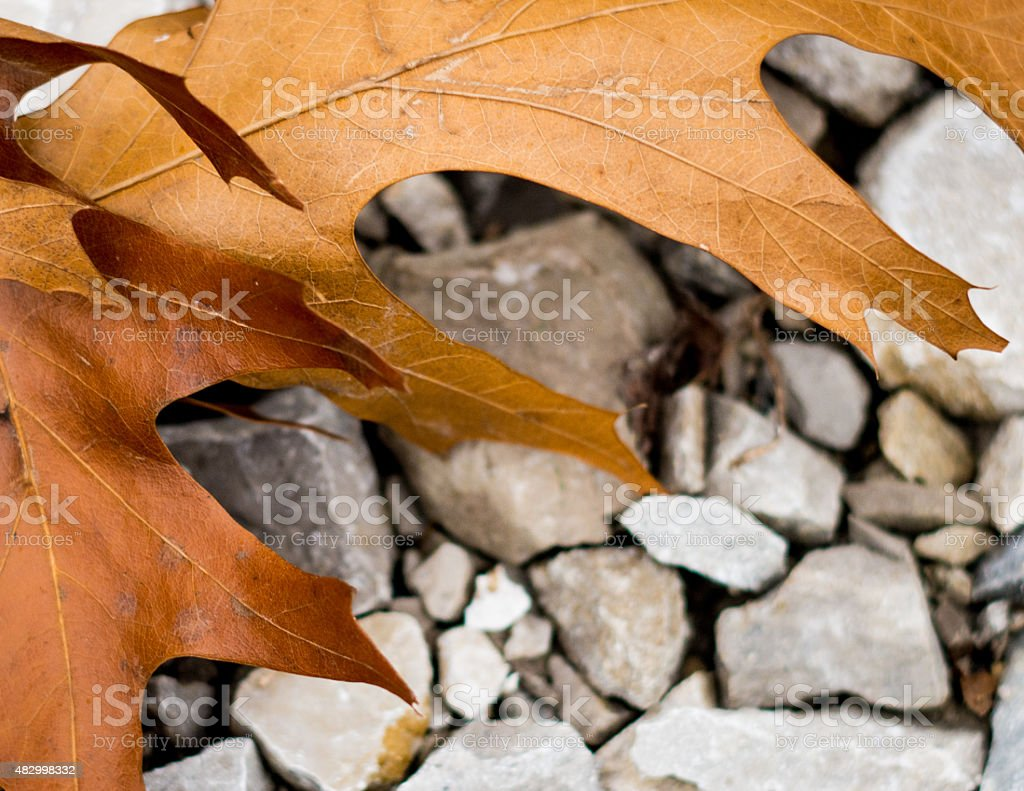 Leathery Leaves stock photo