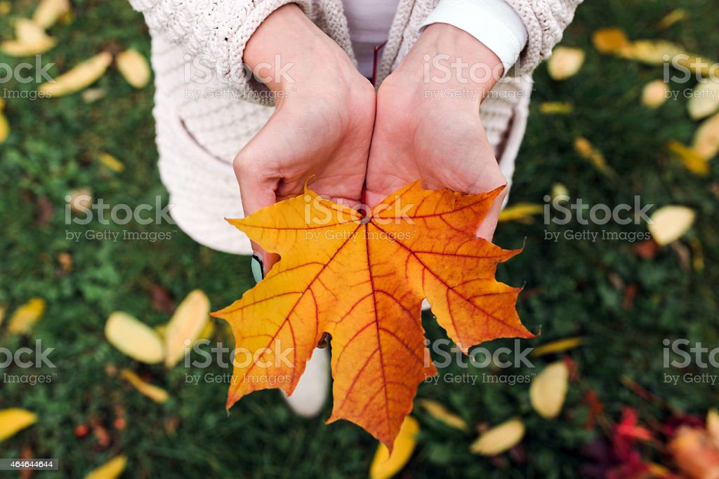 Leave in hands stock photo