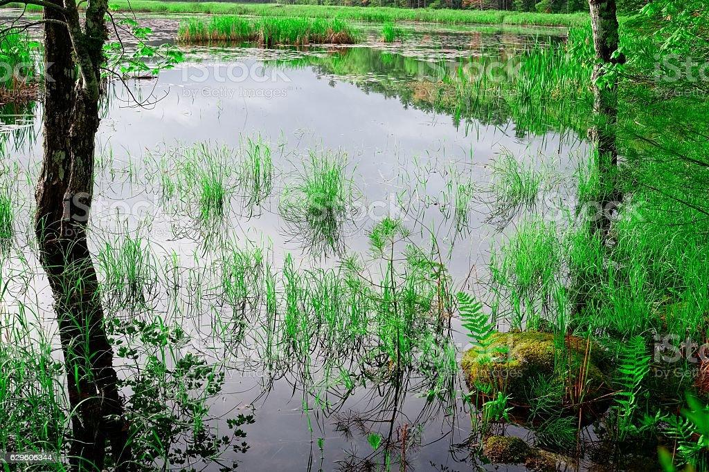 Leave pond wetland, Lunenburg, Nova Scotia stock photo