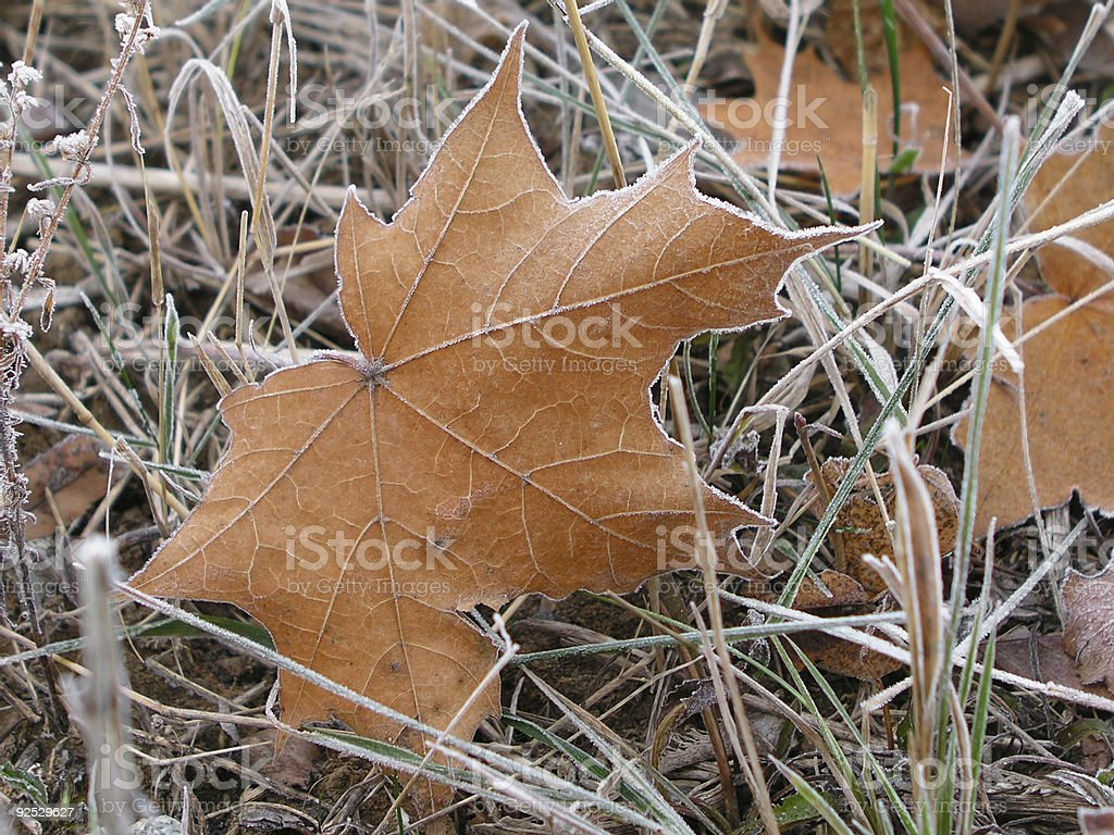 Leaves 14 royalty-free stock photo